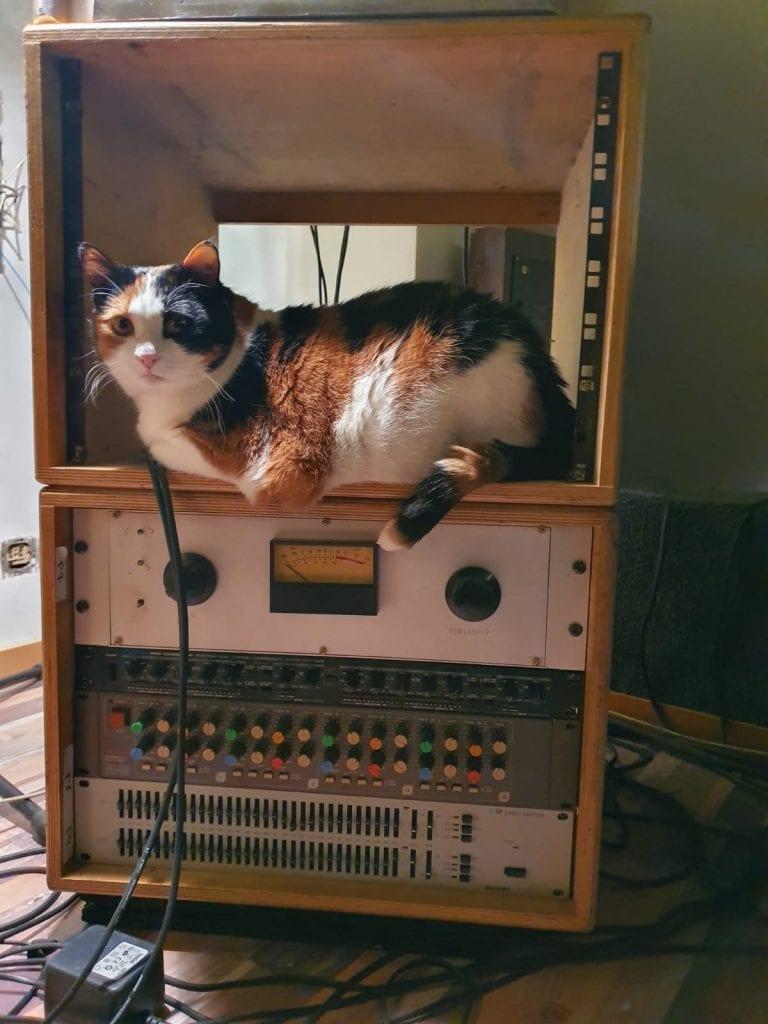 cubicolor studio cat
